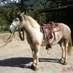 caballo_apache