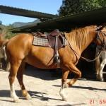 caballo_bayita