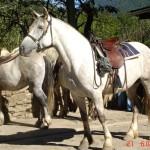 caballo_bruja