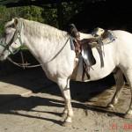 caballo_chato