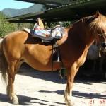 caballo_chuli