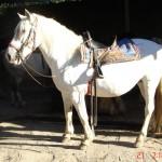 caballo_eva