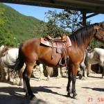 caballo_galan