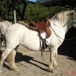 caballo_grisa