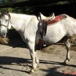 caballo_lenon_john