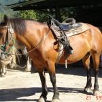 caballo_luna