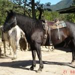 caballo_platero