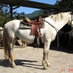 caballo_ron
