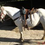 caballo_ventolera