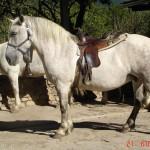 caballo_winni